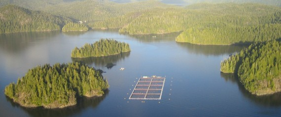 Cermaq owns the open-net salmon farm north of Tofino. | Cermaq Canada