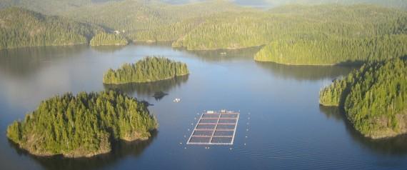 Cermaq owns the open-net salmon farm north of Tofino. | Cermaq Canada