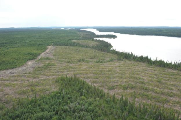 Clear-cut forest on the Broadback River pictured on August 18, 2015, in Waswanipi, Canada (AFP Photo/Clement Sabourin)